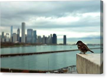 Serenity Of Chicago Canvas Print