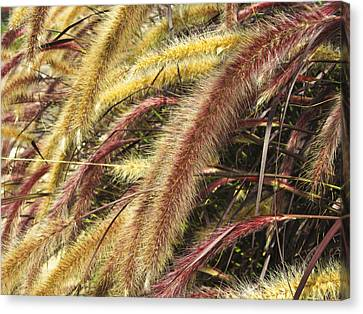 Canvas Print featuring the digital art Setaria Italica Red Jewel - Red Bristle Grass by Anne Mott