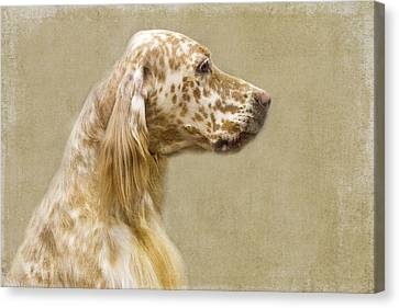 Setter 2 Canvas Print by Rebecca Cozart