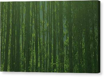 Seward Woods Canvas Print by Michael Nowotny