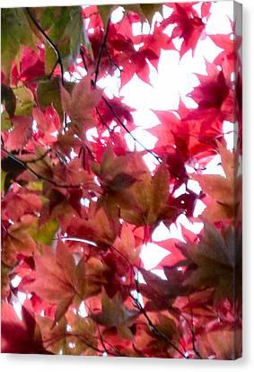 Shades Of Autumn Canvas Print by Debra Collins