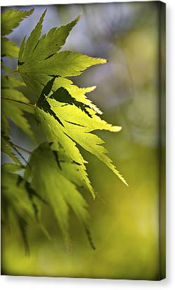 Canvas Print featuring the photograph Shades Of Green And Gold. by Clare Bambers