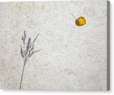 Shadow And A Leaf Canvas Print by James Steele