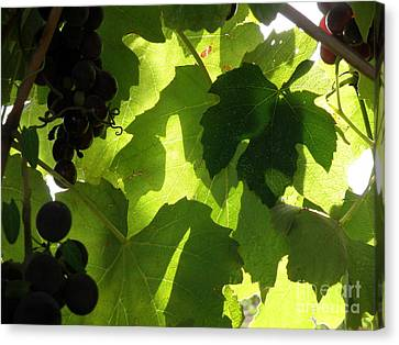 Canvas Print featuring the photograph Shadow Dancing Grapes by Lainie Wrightson