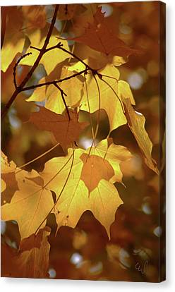 Shadow Dancing Leaves Canvas Print by Michael Flood