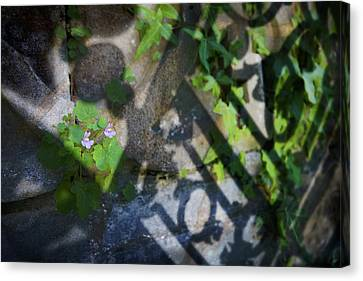 Canvas Print featuring the photograph Shadow Garden by Richard Piper