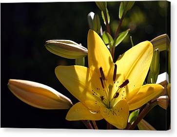 Shadow Lilly Canvas Print by Wendi Curtis