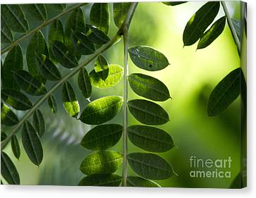 Shadow On Leaf -5 Canvas Print