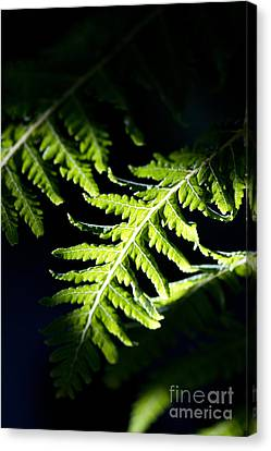 Shadow On Leaf -7 Canvas Print