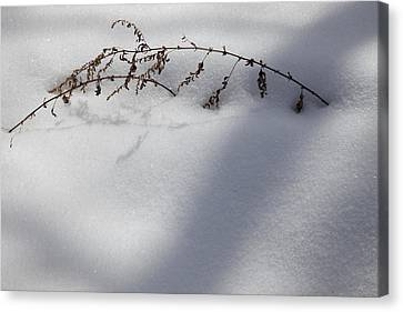 Shadow On Snow 2 Canvas Print