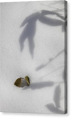 Shadow On Snow Canvas Print