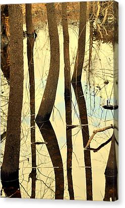 Shadow Trees Canvas Print by Marty Koch