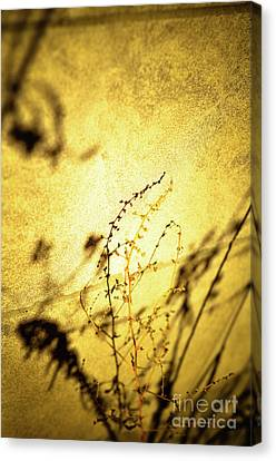 Shadows Canvas Print by Rossi Love