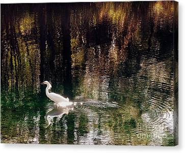 Canvas Print featuring the photograph Shadowwaters by Lydia Holly