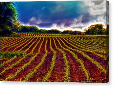 Shagadelic Crop Lines Canvas Print by Bill Tiepelman