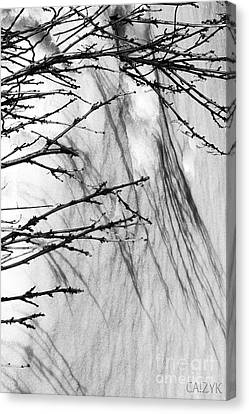 Canvas Print featuring the photograph Shanow8 by Cazyk Photography
