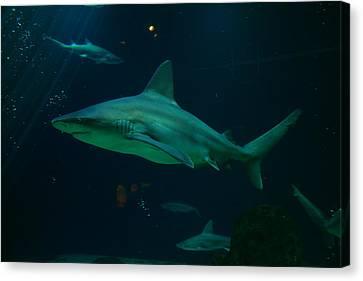 Shark Canvas Print by Jeff Swan