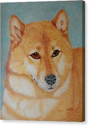 Sheba Inu  Canvas Print by Karen Curley