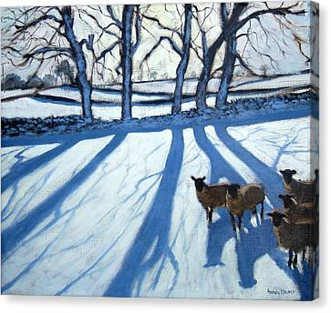 Sheep In Snow Canvas Print by Andrew Macara
