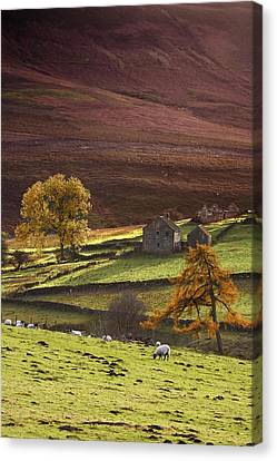 Sheep On A Hill, North Yorkshire Canvas Print by John Short