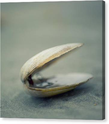 Shell Canvas Print by Jill Ferry Photography