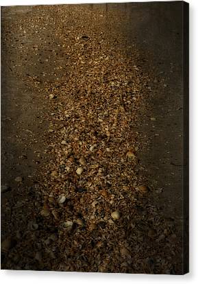 Shell Road Canvas Print by Mario Celzner