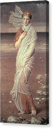 Shells  Canvas Print by Albert Joseph Moore