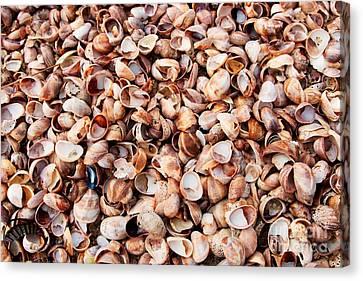 Shells Carpet I Canvas Print