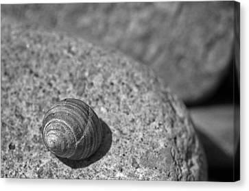 Shells IIi Canvas Print by David Rucker
