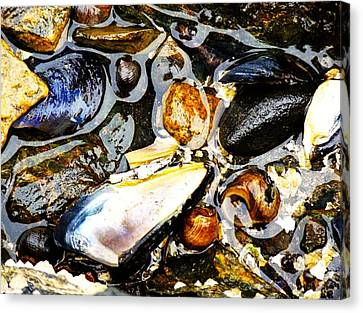 Canvas Print featuring the photograph Shells by Kelly Reber