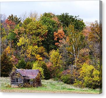Shelter In The Fall Woods Canvas Print