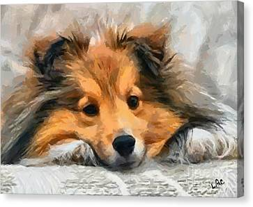 Shetland Sheepdog Canvas Print - Sheltie On Bed by Laurence Canter