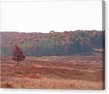 Canvas Print featuring the photograph Shenandoah Plain by Shirin Shahram Badie