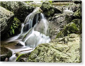 Shenandoah Stream Canvas Print by Shane York