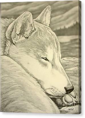 Shiba Inu Canvas Print by Kim Hunter
