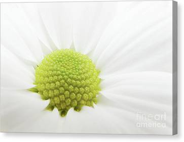 White Flower Canvas Print by Angela Doelling AD DESIGN Photo and PhotoArt