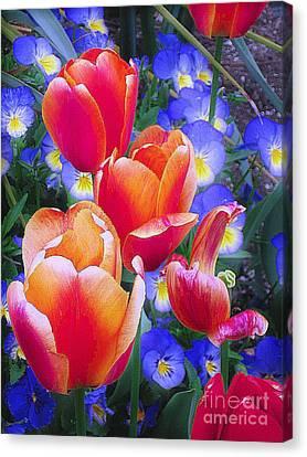 Shining Bright Canvas Print