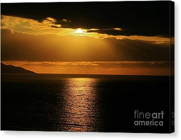 Canvas Print featuring the photograph Shining Gold by Nicola Fiscarelli