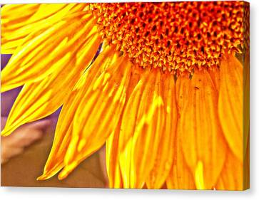 Shining Sunflower Canvas Print by Christy Patino
