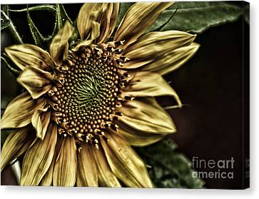 Shinning On You Canvas Print by Tamera James