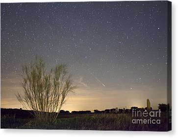 Shooting Star Canvas Print by Andre Goncalves