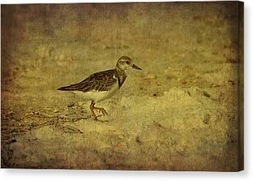 Shore Bird Canvas Print by Sandy Keeton