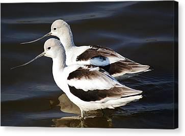 Shore Birds Canvas Print by Paulette Thomas