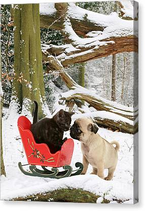 Shorthair Kitten And Pug Canvas Print by Jane Burton