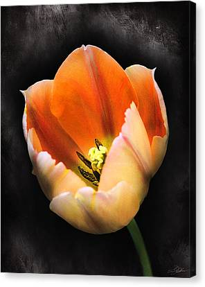 Showing Color Canvas Print by Peter Chilelli