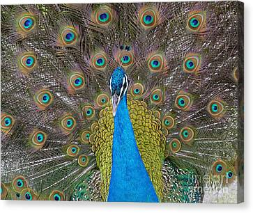 Showing Your True Colors Canvas Print by Terri Thompson