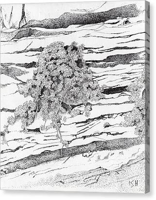 Shrub In Sedimentary Rock Canvas Print by Inger Hutton