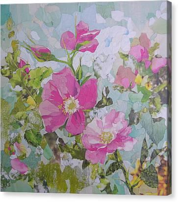 Shrub Roses Canvas Print by Robin Birrell