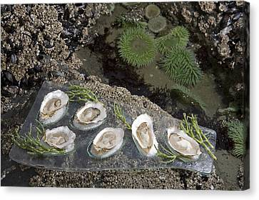 Shucked Oysters Sit On A Platter Next Canvas Print by Taylor S. Kennedy