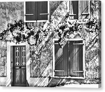 D700 Canvas Print - Shutter And Vine France 2011 by Jack Torcello